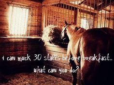mucking stalls. horses