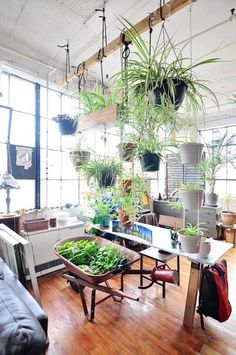 Incredible Indoor Vertical Garden Apartment, When you get started thinking vertically, you're discover your very own innovative methods to create vertical gardens. This vertical garden provides y. First Apartment, Apartment Therapy, Apartment Design, Apartment Ideas, Apartment Layout, Apartment Furniture, Apartment Interior, Hanging Plants, Indoor Plants