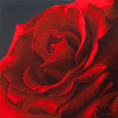 Revelation II - Red Rose By Vincent Keeling - PRINT - The Keeling Gallery
