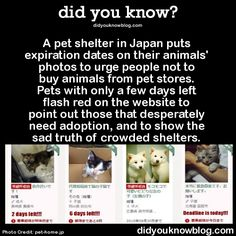 A pet shelter in Japan puts expiration dates on their animals' photos to urge people not to buy animals from pet stores. Pets with only a few days left flash red on the website to point out those that desperately need adoption, and to show the sad truth of crowded shelters. Source