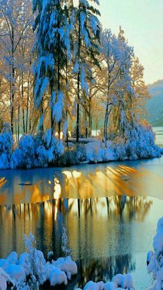 Golden winter sunset.