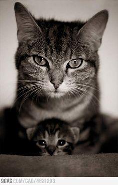 maaaaaaaauw zegt de grote kat .<3  maauw zegt de kleine schattige kat .<3