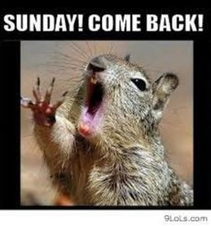 We all love squirrels; they are cute, furry and funny and they make hilarious memes. So here are a few very funny Squirrel memes to put a smile on your face. Sunday Humor, Sunday Quotes, Weekend Quotes, Monday Morning Humor, Morning Quotes, Animal Memes, Funny Animals, Talking Animals, Funniest Animals