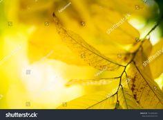 Closeup Nature View Autumn Leaf On ภาพสต็อก (แก้ไขตอนนี้) 1516582463 Autumn Leaves Background, Leaf Background, Red Leather, Leather Jacket, Nature View, Close Up, Image, Fashion, Studded Leather Jacket