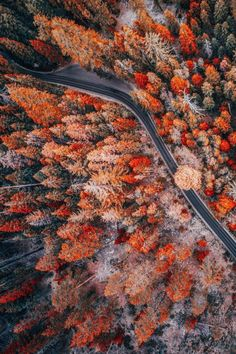 Autumn in aerial view