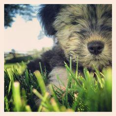 Tiny Tilly