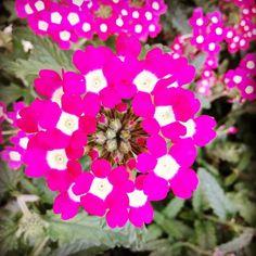 Floral universe. / Universo floral. #flowers #flores #nature #naturaleza