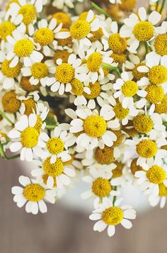 We had these around the well pump. I spent a lot of time day dreaming with daisies, He loves me, He loves me not, he loves me , he loves me not...