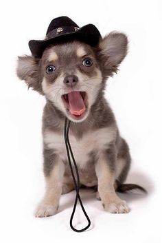 Cowboy puppy looking for cowboy dog names