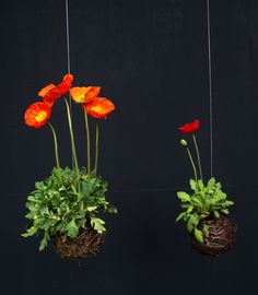 --Idea: String gardens, combined with aquaponics. The string is actually a hollow tube transporting water.