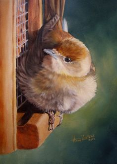 Dinner Time - original oil of a female blackcap on feeder by Anne Zoutsos, painting by artist Anne Zoutsos
