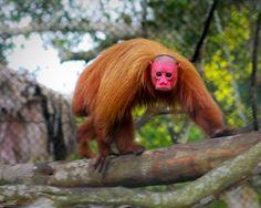 Những sinh vật kỳ lạ trên thế giới giống với con người.