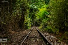 How long has that evening train been gone? by Eduardo Menezes on 500px