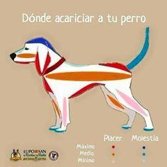 Acariciar a tu perro
