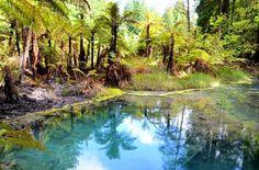 Redwoods Whakarewarewa Forest - Rotorua, New Zealand