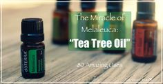 The Miracle Of Tea Tree Oil - 80 Amazing Uses   www.onedoterracommunity.com   https://www.facebook.com/#!/OneDoterraCommunity