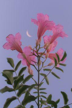 Nature Aesthetic, Flower Aesthetic, Purple Aesthetic, Aesthetic Objects, Aesthetic Light, Aesthetic Vintage, Pastel Flowers, Beautiful Flowers, Pastel Purple