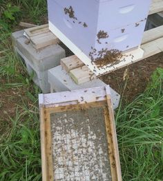 I confess, I was in a bit of a panic about my bees. The Goldenrod has begun blooming and the bees should be filling up their larders, but they seem dispirited and incapable of filling out the corners. Dead Bees, Plan Bee, Bee Keeping, Beetle, Entrance, Bloom, Board Ideas, Lavender, June Bug