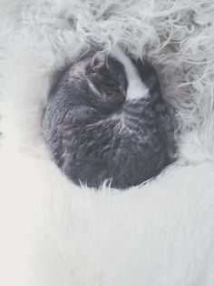 sleeping cat hilde mork