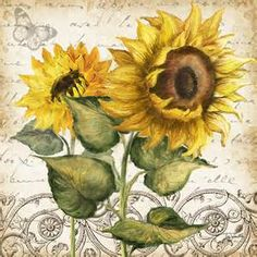 tre sorelle sunflowers - Yahoo Image Search Results