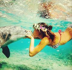 It would be a living dream to swim with dolphins