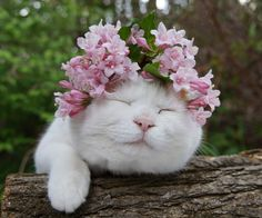 flowers for kitty I Love Cats, Crazy Cats, Cool Cats, Baby Animals, Funny Animals, Cute Animals, Kittens Cutest, Cats And Kittens, Costume Chat