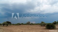 Stock Footage of A static timelapse of a dry, barren landscape (bushveld area) in a game reserve while a thunderstorm with heavy rain and lightning is approaching, guinea fowl scatter past. Explore similar videos at Adobe Stock Guinea Fowl, Game Reserve, Thunderstorms, Stock Video, Stock Footage, Lightning, Adobe, Past, Trees
