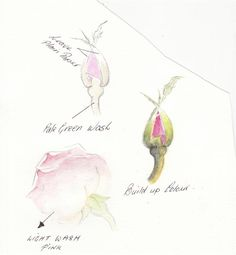 Rose watercolor Pencil | Watercolor tips / Water Color Pencil Roses Tutorial - Step by Step ...