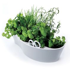 Organise your kitchen herbs in style with the Herb Garden. Grow your own herbs or buy fresh herb pots to plant from the supermarket. Just pick or cut as many fresh herbs as you need with the scissors .