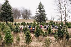 Where to harvest your own real Christmas tree in the Kawarthas. Tree farms in Omemee, Cobourg, Grafton, Colborne, Roseneath and Cramahe offer cut-your-own and pre-cut options.