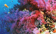 Avustralya'da bulunan Great Barrier Resifleri