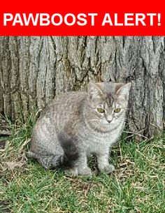 Please spread the word! Murph Juana was last seen in Melrose Park, IL 60164.    Nearest Address: 2056 N Hawthorne Ave, Melrose Park, IL, United States
