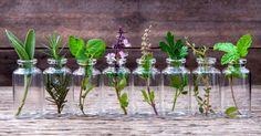Tener un jardín de hierbas aromáticas en casa es una gran idea. Te permite tener siempre a mano tus preferidas para añadirlas a tus platos favoritos. Y no necesitas grandes conocimientos ni siquiera, en este caso, una pizca de tierra. Estas aromáticas que relacionamos a continuación son las que se usan habitualmente