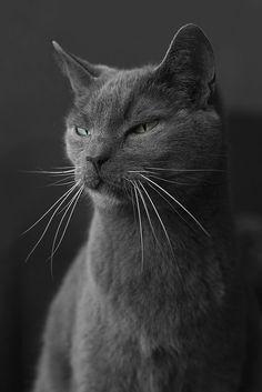 Gray Cat on Gray - Charcoal Gray