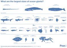 Marine_megafauna_Infographic_2