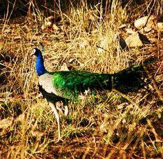 Betla national park #latehar #govindpathak #betlanationalpark #wildlife #nationalparks