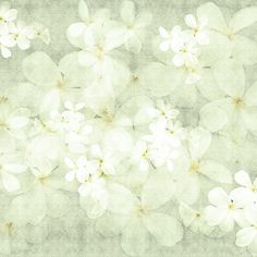 White Floral wallpaper brings a breath of fresh air into a any room with it's bright and calm features.  White Floral wallpaper features tonal white fresh flowers on to a textured background. This wallpaper is part of the All Things British Range.