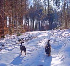 Mit den Hunden im Wald unterwegs