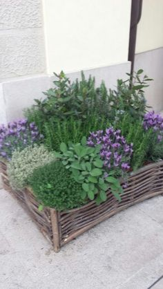 I sometimes make this sort of thing with herbs and give them as hostess gifts. Everyone loves fresh herbs!