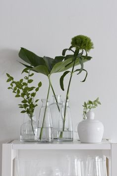 fresh white and forest green. Indoor plants and cactus. An assortment of different house plants and foliage. Green rooms and rooms with potted plants. Deco Floral, Arte Floral, Green Plants, Green Flowers, Cut Flowers, Indoor Garden, Indoor Plants, Potted Plants, Grand Vase En Verre