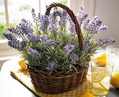 Looking as if it came straight from an English country garden, our basket of lavender makes a romantic statement in a conservatory or kitchen (especially when fragranced with a drop or two of our lavendar scent).