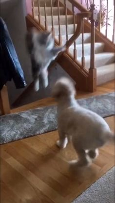 Beware the stairs Funny Cute Cats, Funny Cats And Dogs, Cute Funny Animals, Cute Baby Animals, Animals And Pets, Cats And Kittens, Cute Animal Videos, Funny Animal Pictures, Tier Fotos