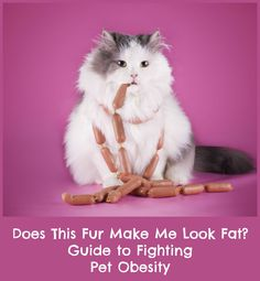 Does This Fur Make me Look Fat? Guide to Fighting Pet Obesity