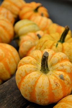 #autumn #photos #fall #squash #pumpkins