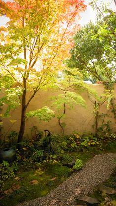 Cafe home Garden