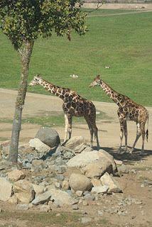 Safari Park in San Diego