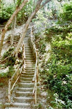 Jacob's Ladder in Cameron Park.   We had a picnic one day and I think I climbed that thing a hundred times.....It was so much fun...