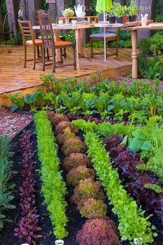How to Plan your Vegetable and Herb Garden--beautiful rows of lettuce!
