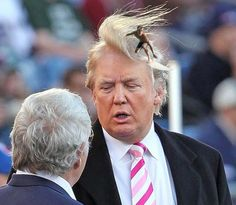37 Funny Pictures, Oh Yes, You Will Laugh Donald Trump hair surfer ~funny pictures Donald Trump Hair, Donald Trump Twitter, Donald Trump Funny, Satire, Laugh Out Loud, Funny Pictures, Crazy Pictures, Funny Pics, Funny Stuff