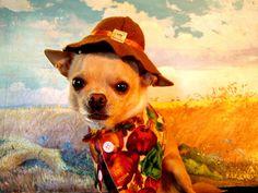 Pilgrim Pup